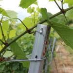 Szőlőhuzalok, szőlő oszlopok