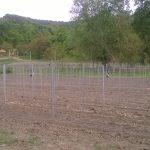 Parasznya Uborkaültetvény Szőlőoszlopok
